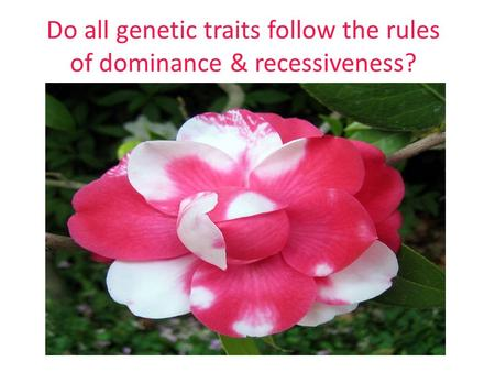 Do all genetic traits follow the rules of dominance & recessiveness?