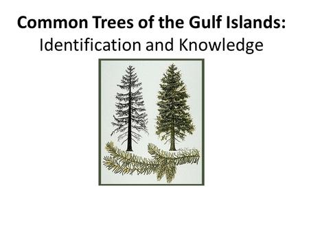 Common Trees of the Gulf Islands: Identification and Knowledge.