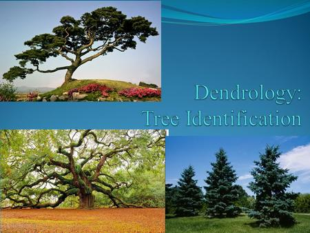 POINT > Define forest, silviculture and dendrology POINT > Describe characteristics of conifers POINT > Describe characteristics of deciduous trees POINT.