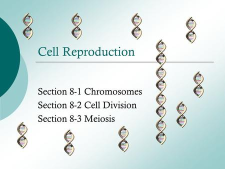 Section 8-1 Chromosomes Section 8-2 Cell Division Section 8-3 Meiosis