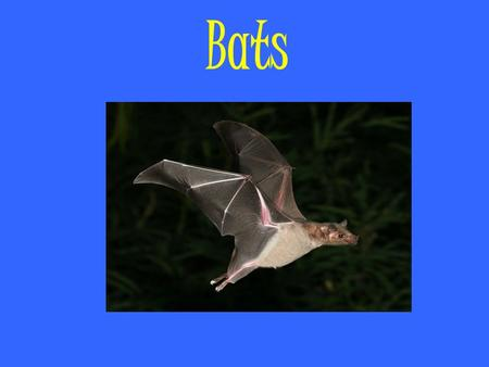 Bats. Vocabulary Membranes – is a thin, pliable layer of tissue covering surfaces or separating or connecting regions, structures, or organs of an animal.