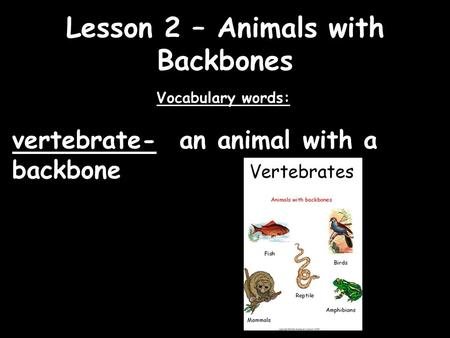 Lesson 2 – Animals with Backbones Vocabulary words: vertebrate- an animal with a backbone.