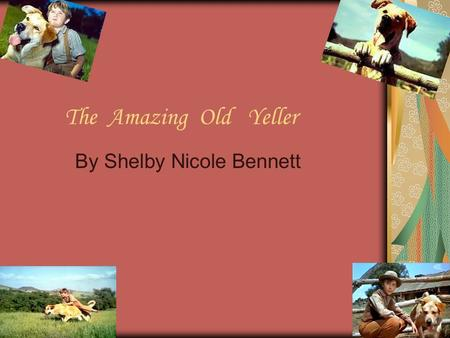 T he Amazing Old Yeller By Shelby Nicole Bennett.