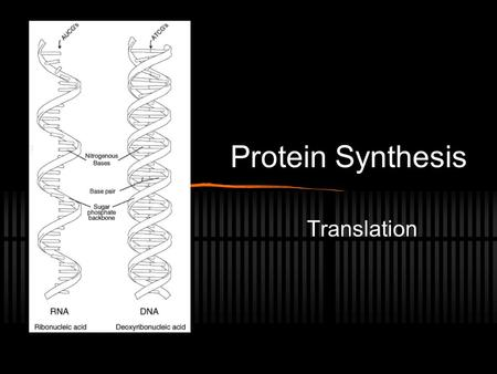 Protein Synthesis Translation  e.com/watch?v=_ Q2Ba2cFAew (central dogma song)  e.com/watch?v=_ Q2Ba2cFAew.