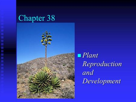 Chapter 38 n Plant Reproduction and Development. Sexual Reproduction n Alternation of generations: haploid (n) and diploid (2n) generations take turns.