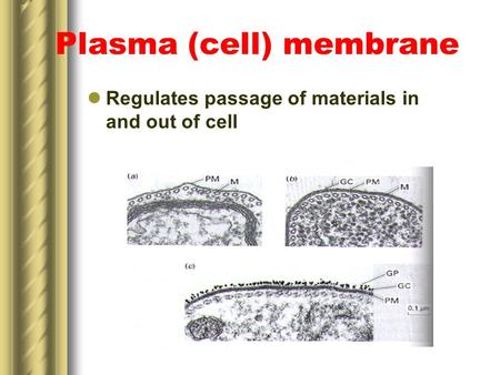 Plasma (cell) membrane Regulates passage of materials in and out of cell.