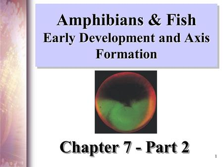 Amphibians & Fish Early Development and Axis Formation