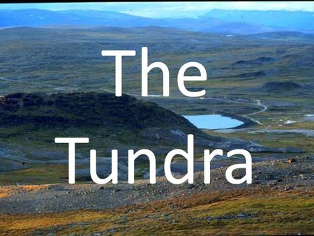 The Tundra. The Climate Located: top of the world, near the North Pole The soil is often frozen. Permafrost, or permanent ice, usually exists within.