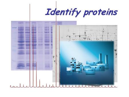 Identify proteins. Proteomic workflow Trypsin A typical sample We add a solution of 50 mM NH 4 HCO 3 (pH 7.8) containing trypsin (0.01-5 µg/µl). Volume.
