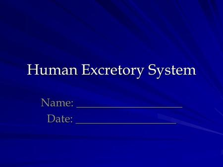 Human Excretory System Name: ___________________ Date: __________________.