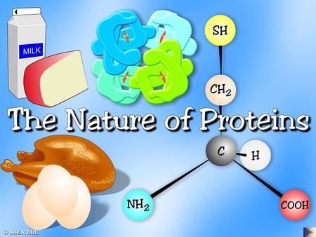 © SSER Ltd.. Proteins are huge three-dimensional molecules whose building blocks or monomers are the variety of different amino acids found in nature.