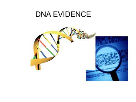 DNA EVIDENCE. What is DNA? DNA stands for deoxyribonucleic acid and contains genetic information. DNA is a polymer composed of building blocks called.