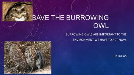SAVE THE BURROWING OWL BURROWING OWLS ARE IMPORTANT TO THE ENVIRONMENT WE HAVE TO ACT NOW. BY LUCAS.