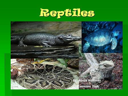 Reptiles By: Alicia Hoffman Cameron York. What is a reptile??  Reptiles have been around for 300 million years, and during the age of the dinosaurs,