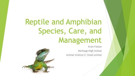 Reptile and Amphibian Species, Care, and Management Evan Faison Heritage High School Animal Science 2: Small Animal.