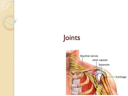 Joints. Objectives Name the 3 types of joints Give examples of each type of joint.