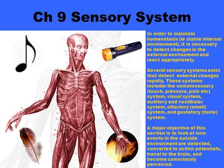 Ch 9 Sensory System In order to maintain homeostasis (ie stable internal environment), it is necessary to detect changes in the external environment and.