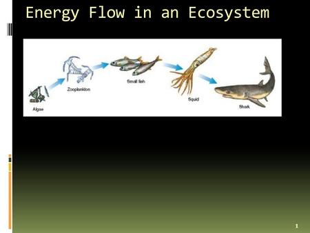 Energy Flow in an Ecosystem 1. __Food Chain_- a diagram that shows how energy flows from 1 organism to the next 2.