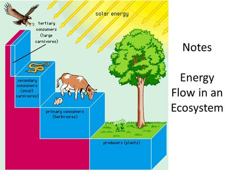 Notes Energy Flow in an Ecosystem. Initial Energy Source Sunlight is the main energy source for life on Earth!