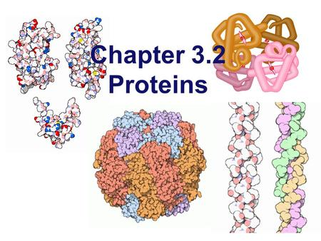 Chapter 3.2 Proteins Proteins  Most structurally & functionally diverse group of biomolecules  Functions:  involved in almost everything  enzymes.