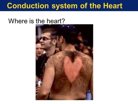 Conduction system of the Heart Where is the heart?