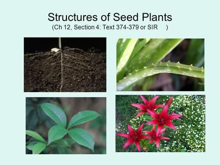 Structures of Seed Plants (Ch 12, Section 4: Text 374-379 or SIR )