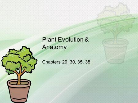 Plant Evolution & Anatomy Chapters 29, 30, 35, 38.