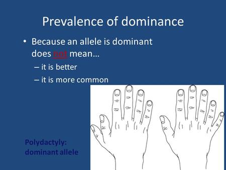 Prevalence of dominance Because an allele is dominant does not mean… – it is better – it is more common Polydactyly: dominant allele.