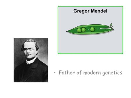 The life and work of Gregor Mendel Over seven years, Mendel experimented on more than 28,000 pea plants! Why were his experiments so successful? Pea.
