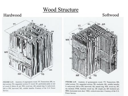 1 Wood Structure Hardwood Softwood. Variability in wood products frequency strength Solid wood 2.