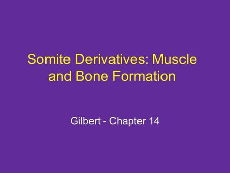 Somite Derivatives: Muscle and Bone Formation Gilbert - Chapter 14.