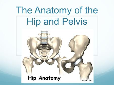 The Anatomy of the Hip and Pelvis. Bony Anatomy Femur = Thigh Bone Longest and strongest bone Designed for maximum support and mobility during weight-