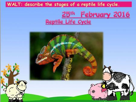 WALT: describe the stages of a reptile life cycle.