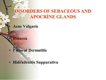 DISORDERS OF SEBACEOUS AND APOCRİNE GLANDS Acne Vulgaris Rosacea Perioral Dermatitis Hidradenitis Suppurativa.