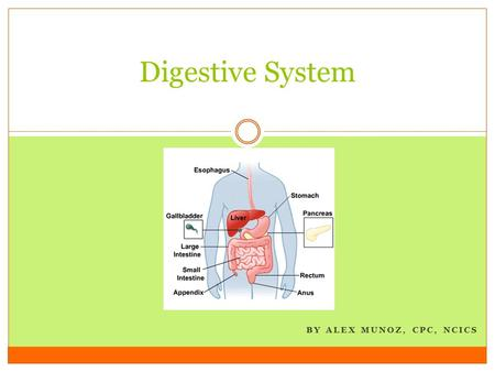 BY ALEX MUNOZ, CPC, NCICS Digestive System. Divided by anatomic site from mouth to abdomen, peritoneum, and omentum + organs that aid digestive process.