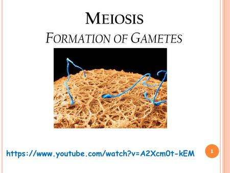 M EIOSIS F ORMATION OF G AMETES 1 https://www.youtube.com/watch?v=A2Xcm0t-kEM.