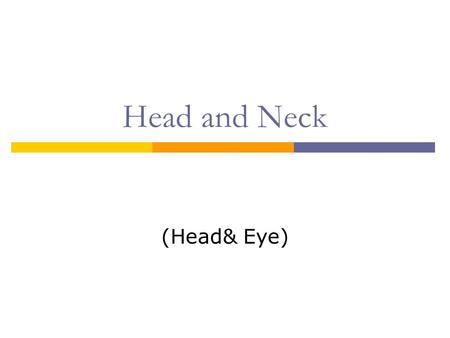 Head and Neck (Head& Eye). The Head Anatomy The External Eye Medial chanthus.
