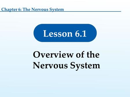 Lesson 6.1 Overview of the Nervous System Chapter 6: The Nervous System.