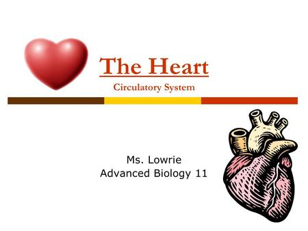 The Heart Circulatory System Ms. Lowrie Advanced Biology 11.