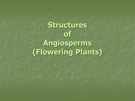 Structures of Angiosperms (Flowering Plants). Vascular Tissue (Plumbing) Xylem (moves water + nutrients) Xylem (moves water + nutrients) Phloem (moves.