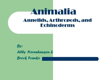 Annelids, Arthropods, and Echinoderms By: Abby Nerenhausen & Brock Franko Animalia.