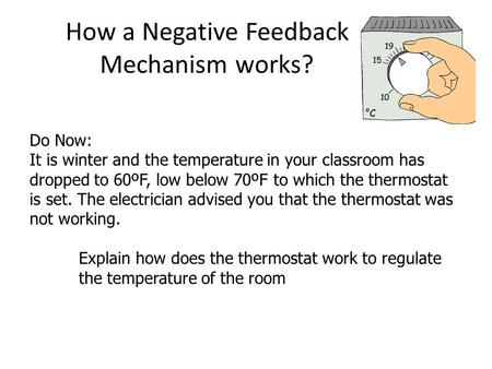 How a Negative Feedback Mechanism works? Do Now: It is winter and the temperature in your classroom has dropped to 60ºF, low below 70ºF to which the thermostat.
