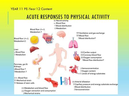 ACUTE RESPONSES TO PHYSICAL ACTIVITY YEAR 11 PE-Year 12 Content.
