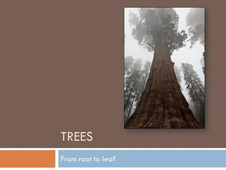 TREES From root to leaf. Trees  A tree is a non-linear collection  The elements are in a hierarchical arrangement  The elements are not accessible.