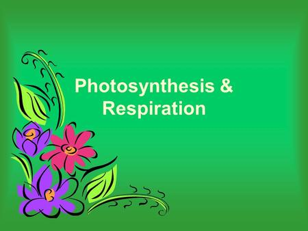 Photosynthesis & Respiration. Overview of photosynthesis and respiration PHOTOSYNTHESIS CELLACTIVITIES RESPIRATION SUN RADIANT ENERGY GLUCOSEATP(ENERGY)