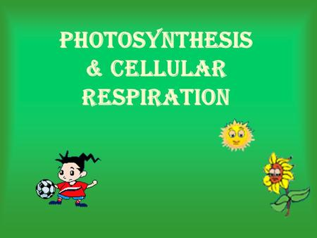 Photosynthesis & Cellular Respiration. What is Photo- synthesis? The process of photosynthesis is a chemical reaction. Producers, or autotrophs, are organisms.