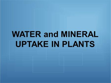 WATER and MINERAL UPTAKE IN PLANTS. Transport of Water in Plant Water enters a plant through its ROOT HAIR CELLS. Root hairs increase the surface area.