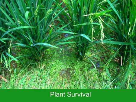 Plant Survival. The Earth can be very, very cold …