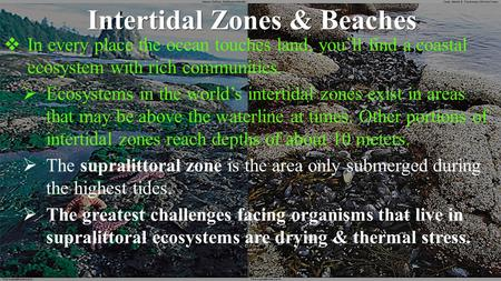 Intertidal Zones & Beaches  In every place the ocean touches land, you'll find a coastal ecosystem with rich communities.  Ecosystems in the world's.
