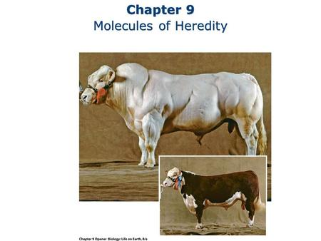 Chapter 9 Molecules of Heredity Chapter 9 Molecules of Heredity.